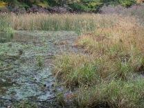 Wetland water levels rising