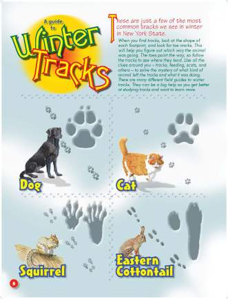 Winter Track Sheet from DEC's Conservationist for Kids Guide to Winter Tracks