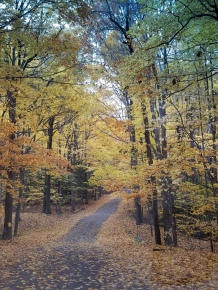 Fall color in Chestnut Ridge Park