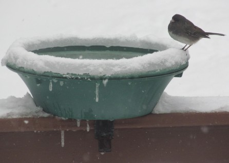 Provide water for birds using heated bird baths
