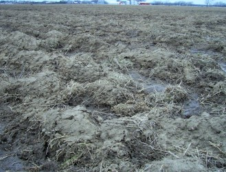 Plowed fields are nearly devoid of small mammals and therefore typically not good foraging habitat for winter raptors.