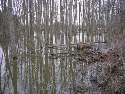 Flooded forested wetland