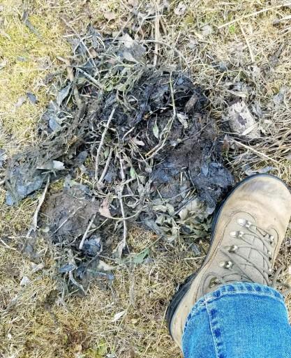 Beaver scent mound (photo by Kristen Rosenburg)