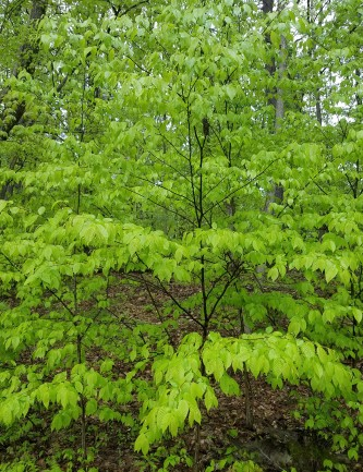 Return to a vibrant green landscape - most trees are nearly leafed out