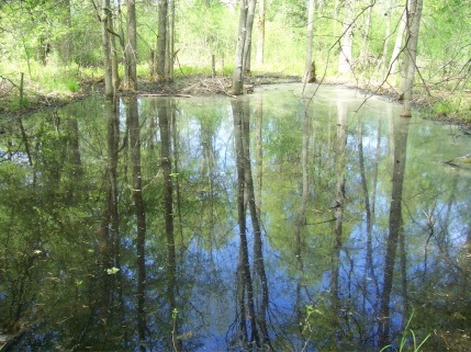Vernal pools are filled to the brim and teaming with life.