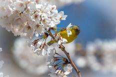 Nashville warbler (Photo by Brittany Rowan)